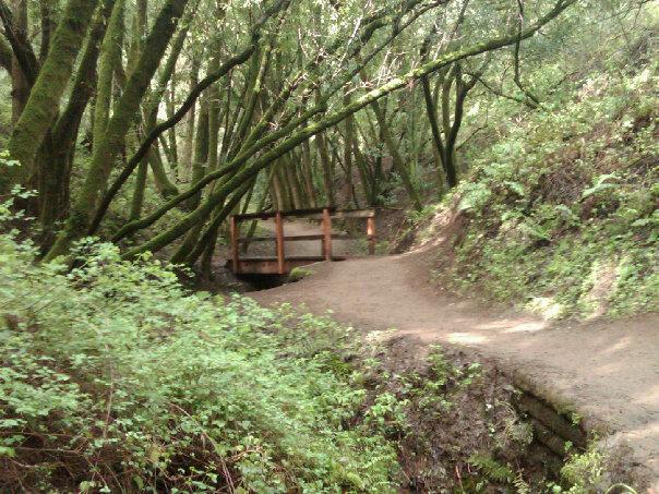 bridge hike trail woods