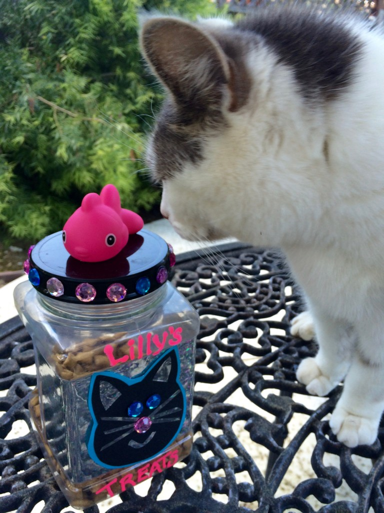 DIY Cat Treat Jar