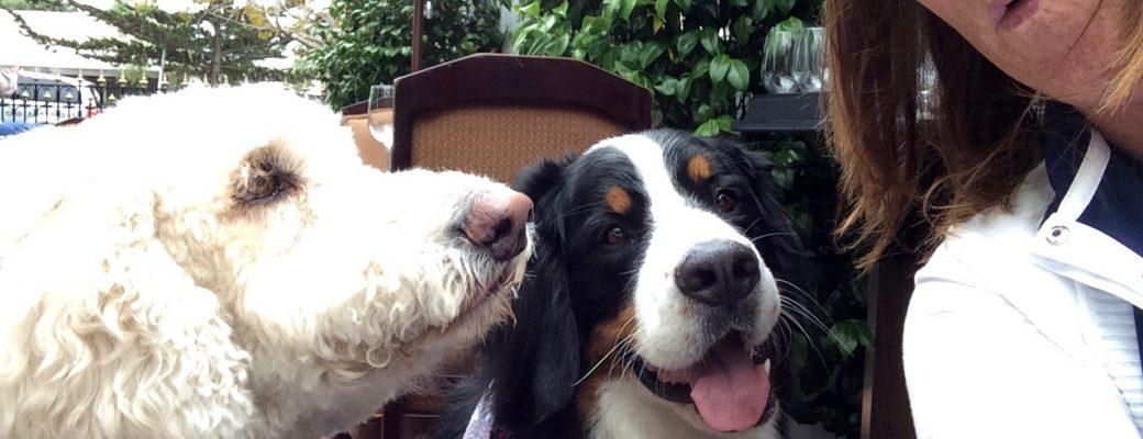Lucy and Dakota
