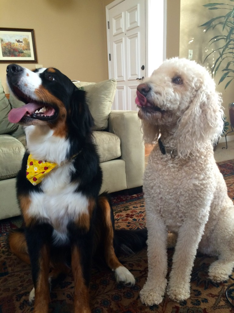 Dakota and Lucy