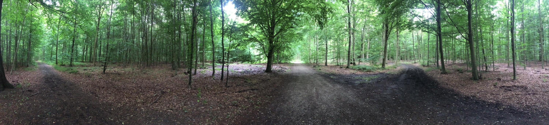 Naeurm Forest