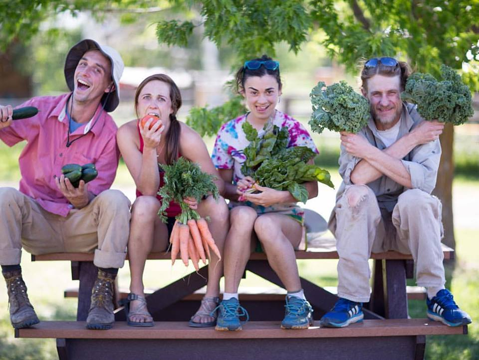The Dirty Life: On Farming, Food, and Love by Kristin Kimball: A Book Review